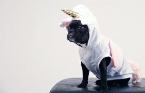 chien deguisement licorne